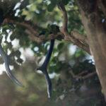 藍染鹿角の染色風景